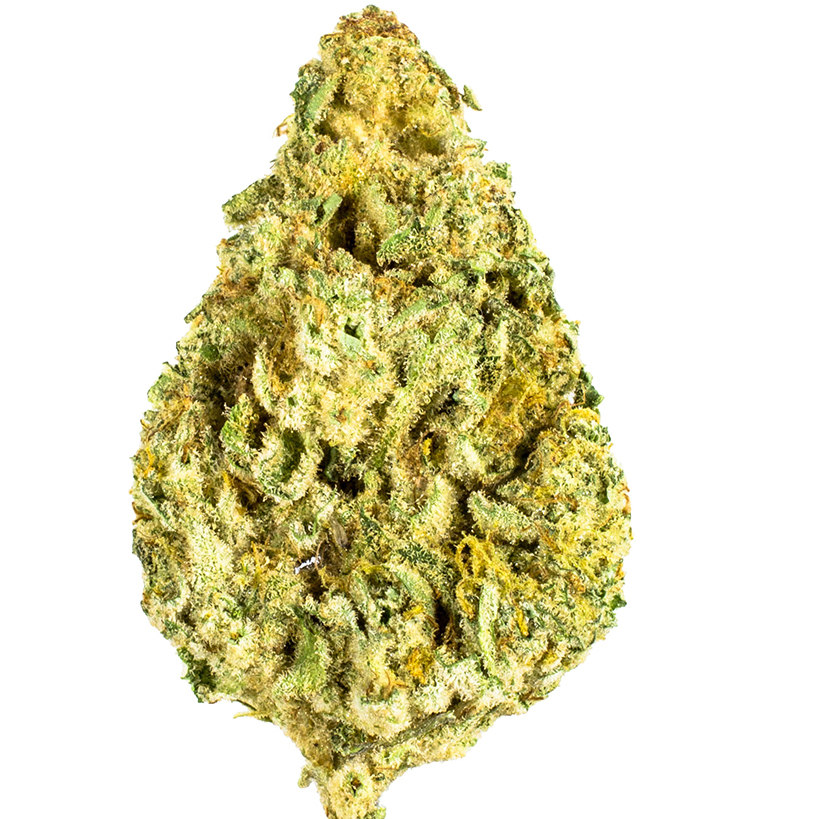 Mob Boss marijuana bud