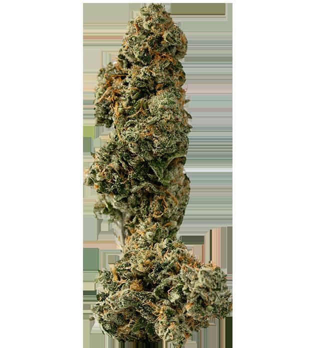 Bruce Banner marijuana bud