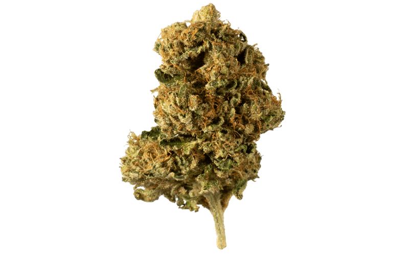 Blue Diesel marijuana bud