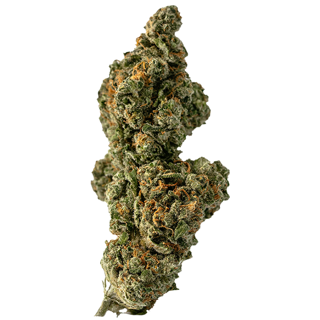 Blueberry Headband  marijuana bud