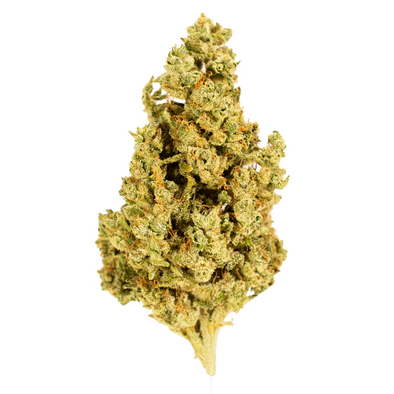 Capital G marijuana bud