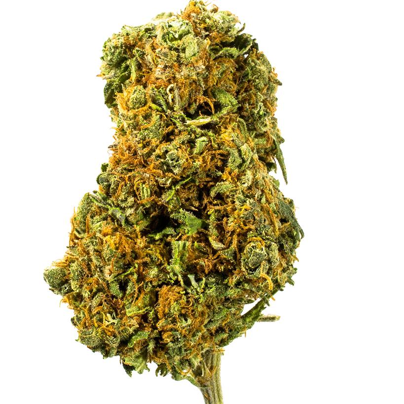 Good Medicine marijuana bud