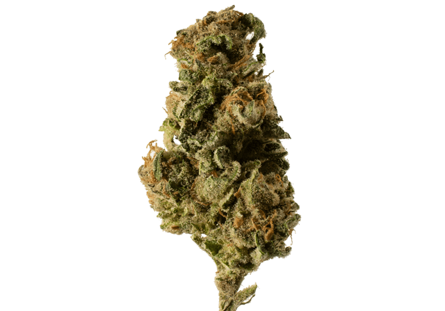 Grape Stomper marijuana bud