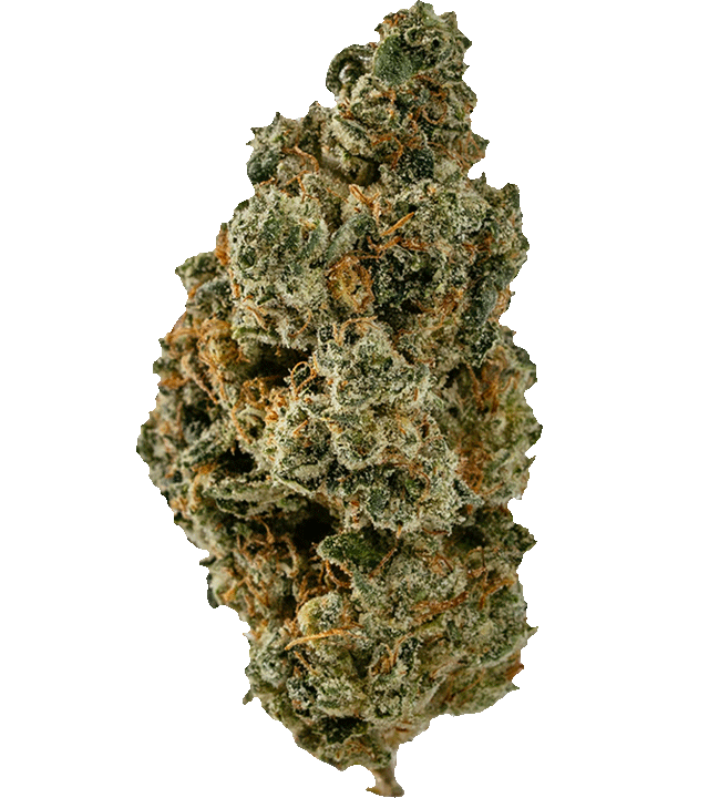 Humdinger marijuana bud