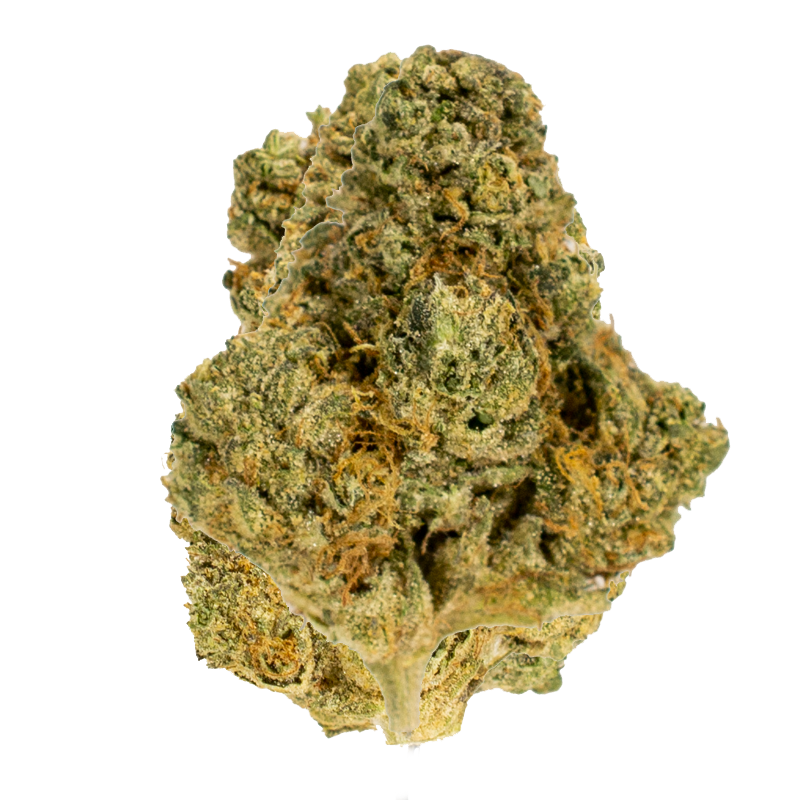 Sour Cookies marijuana bud