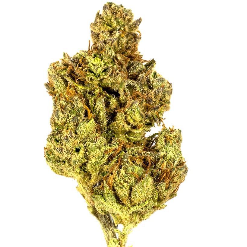 Tangerine Power marijuana bud