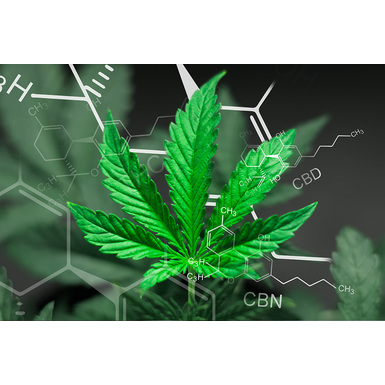 Beyond THC & CBD: A Look at Some Other Popular Cannabinoids