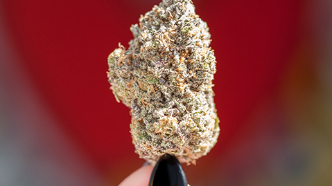 Cannabis Strains for Your Next Date